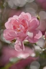 4-713 Bouquet